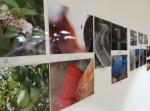 Ja tenim guanyadors de la I edició del concurs de fotografia del COFB