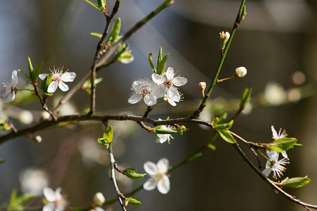 La primavera és l'època de l'any amb el nombre més gran de persones afectades per astènia.