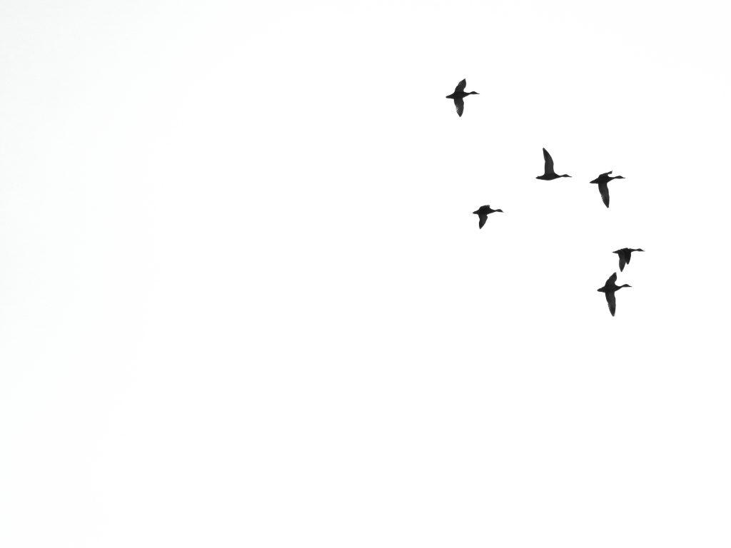 """""""Aves de paso"""" - Manuel Francisco Mazario. Fotografia guanyadora en la categoria en blanc i negre [càmera]"""